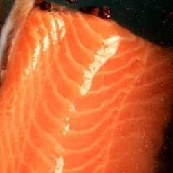 Salmon Fillet Soaking In a Liquid Brine Solution