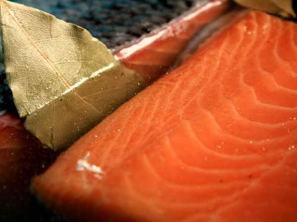 Salmon Fillets in Simple Brine, With Bay Leaf