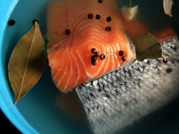 Salmon Fillets Brining With Peppercorns, Garlic and Bay Leaves, For Cold Smoked Salmon Recipe