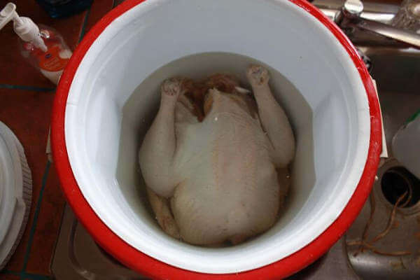 Whole Turkey Being Brined In an Insulated Igloo Cooler